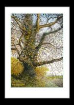 Autumnal oak tree ~ BusyNote