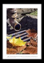 Ian Pethers print ~ Drainpipe