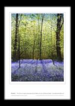 Ian Pethers print ~ Bluebells