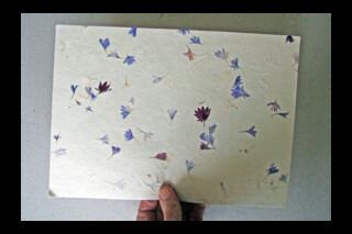 Lokta Cornflower Petal A4 paper